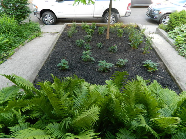Leslieville Front Garden Weeding and Makeover After by Paul Jung Gardening Services--a Toronto Ecological Gardening Company
