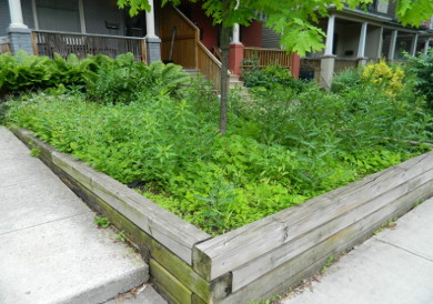 Leslieville Toronto Front Garden Weeding and Makeover Before by Paul Jung Gardening Services--a Toronto Gardening Services Company