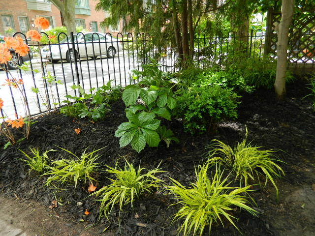 Toronto Summerhill front garden renovation after by Paul Jung Gardening Services--a Toronto Ecological Gardening Company
